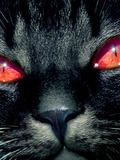 Death [Cat incarnation]